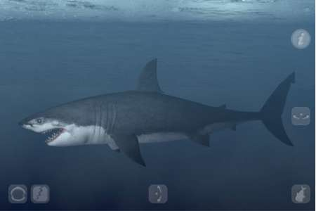 Talking Great White [1.0.0] [iPhone/iPad Touch]
